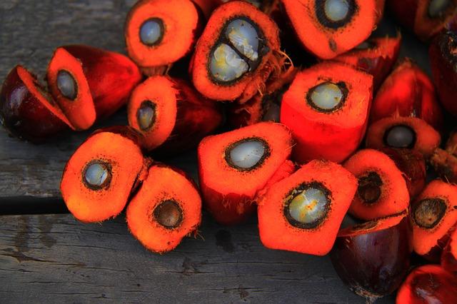 palm-oil-1022012_640