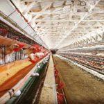 抗生物質を使わない卵とはどんな環境で作られるのか?【平飼いの卵との違い】