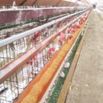 人間も養鶏も食べ物で体はできている
