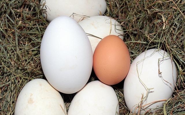 egg-1268339_640