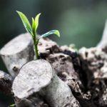 人の腸内と植物の土は似ている?【国産無農薬レモン】