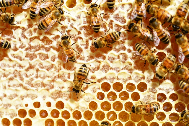 bees-345628_640