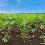 農業は植物だけではなく人も育てる