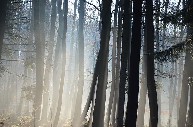 forest-1282729_640