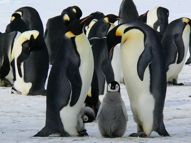 penguins-429128_640