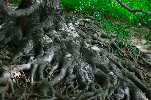 roots-164054_640