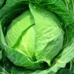 キャベツのすごい栄養、効能、解毒作用