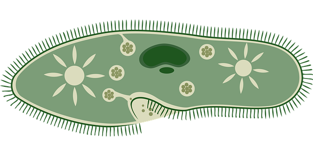 biology-1295384_640