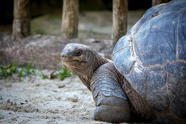 turtle-1514109_640