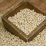 大豆だけでできた超伝統的な方法で赤味噌作り【我が家の菌活】