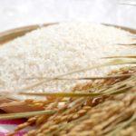 日本人のDNAには米が息づいている