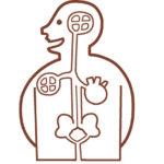 身体に共生する菌と人間の免疫細胞のバランス