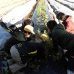子どもにも伝わる無肥料無農薬の自然栽培の味