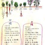 身体を元氣にするレシピを紹介【日本発祥である陰陽食養料理術パート1】