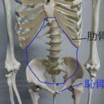 「腰」は人体の要・腰痛を遠ざけるためのケアの方法【日常生活に取り入れる「陰陽」】