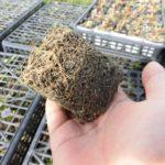 病気の原因が土ではない理由【自然栽培イチゴの奥深さ】
