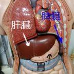 東洋医学における「消化器」胃腸の養生法