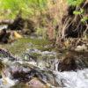 「自然栽培」は水をきれいにする【土と植物がもつ力を最大限に生かしていくのが自然栽培】