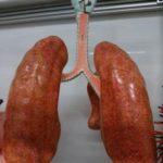 皮膚のコンディションは呼吸器や消化管の状態のバロメーター【柑橘系の生薬の作用】